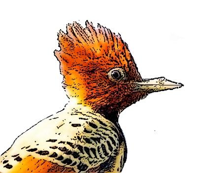 Butisit.ca logo