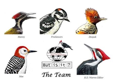 bit-team