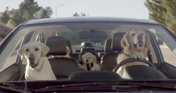 dogs-driving-cars