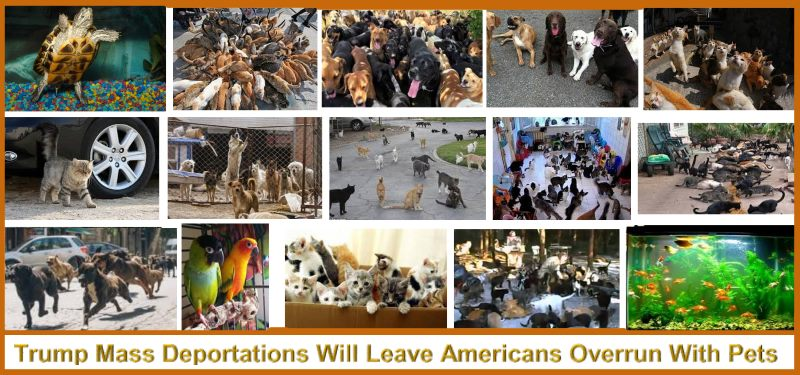 Trump mass-deportations-leave-pets-behind