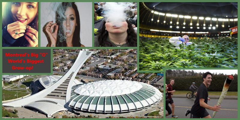 "Montreal to be Marijuana Capital as Justin Trudeau approves Big ""O"" for growing Pot!"