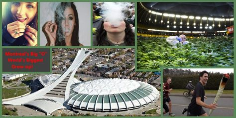 Growing pot in Montreal's Olympic Stadium