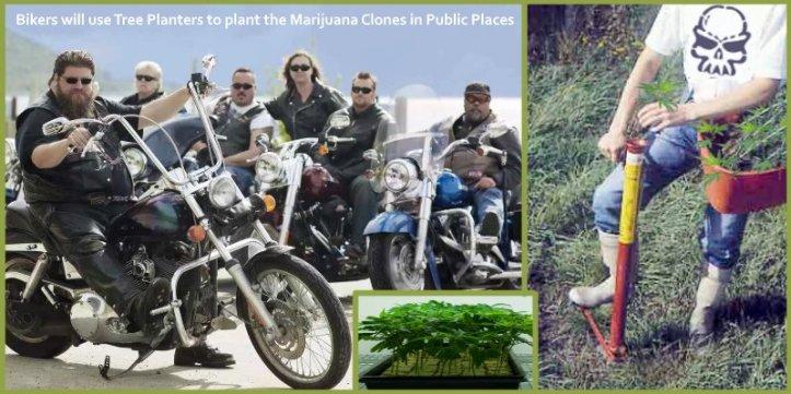 Biker Gangs Growing Pot