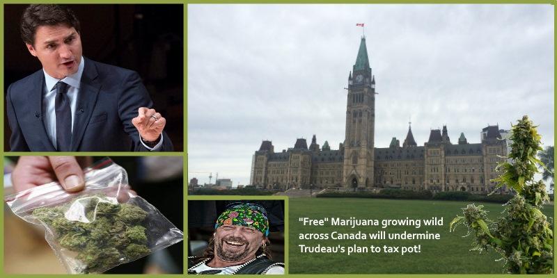 Justin Trudeau Legalizes Pot